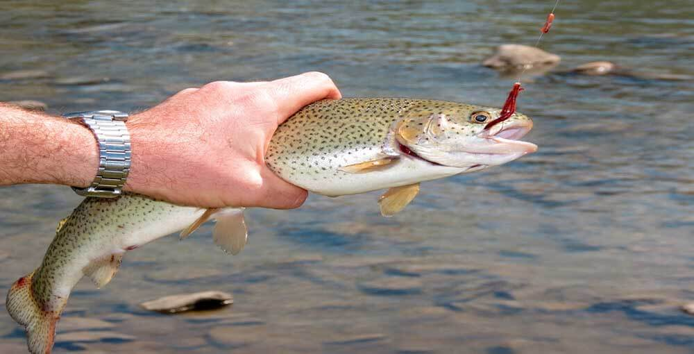 Trout fishing tricks for Lake trout fishing lures