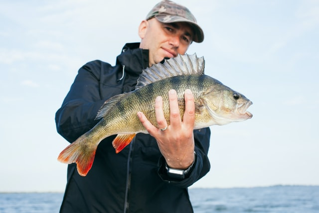 sea-bass-holding