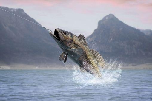 Pflueger PRESSP President – Best for Bass Fishing