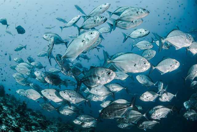 underwater cameras - fish